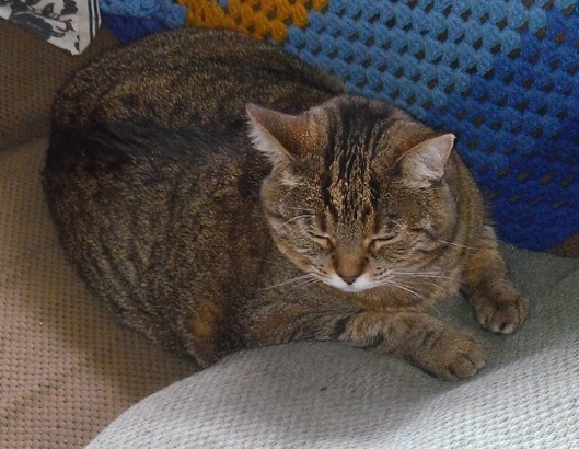 Annoyed Tabby Cat