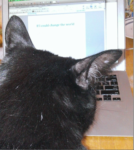 Black cat sitting at computer screen