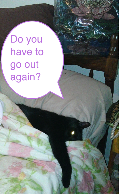 Black cat in bed with comic bubble