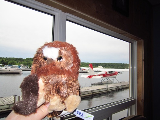 Stuffed owl beside float plane