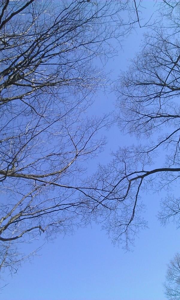 1 park bench, 2 trees, 4 seasons (6/6)