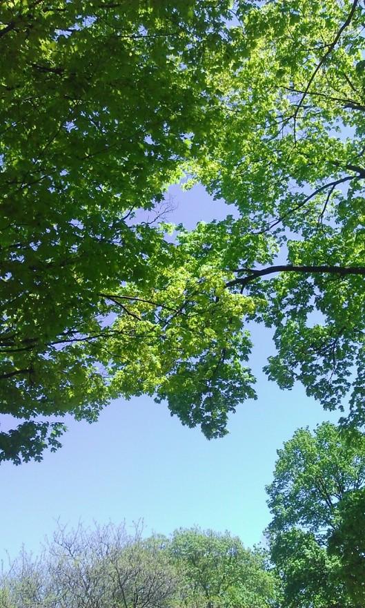 Park trees May 2015