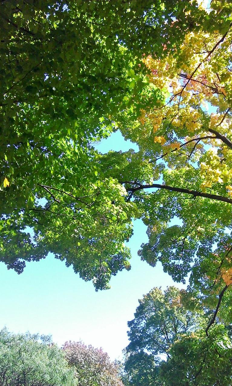 Park trees September 2014