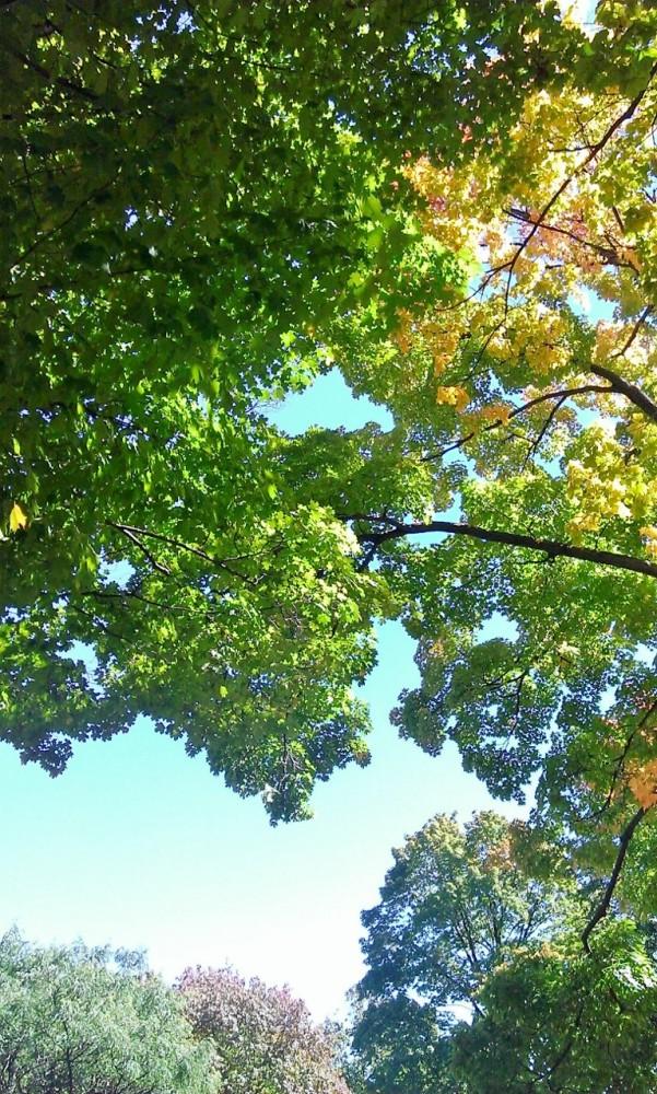 1 park bench, 2 trees, 4 seasons (2/6)