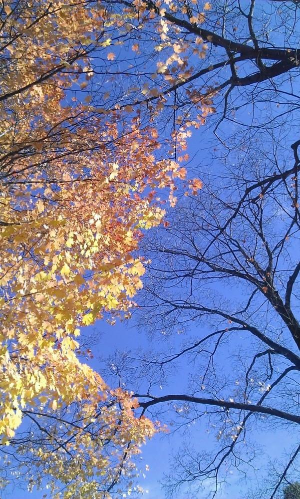 1 park bench, 2 trees, 4 seasons (3/6)