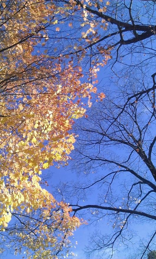 Autumn 2014 trees