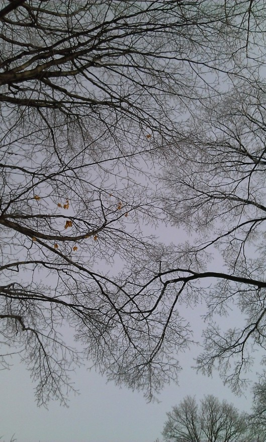 tree branches in january