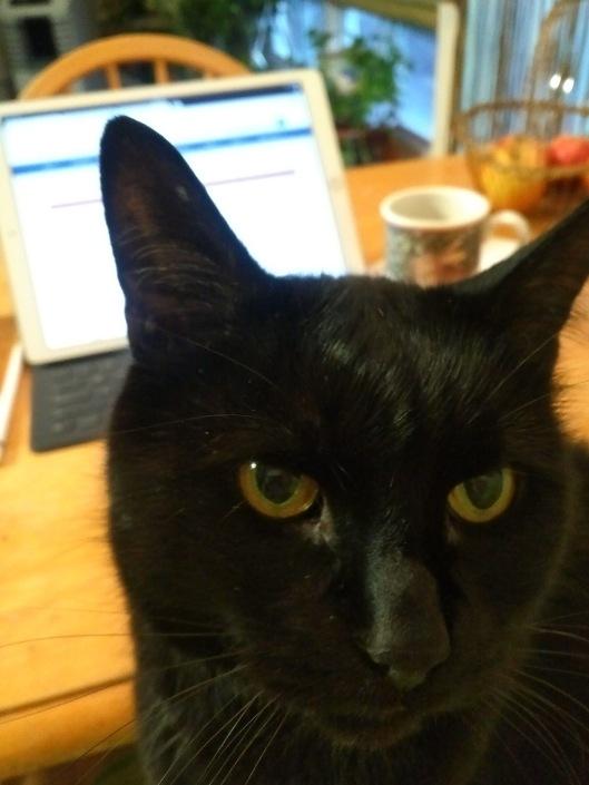 Black cat on lap