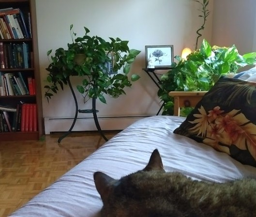 Tabby cat resting in front of house plants