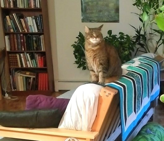 Tabby cat on quilt on futon