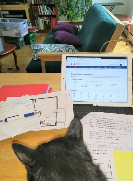 black cat in front of documents and tablet