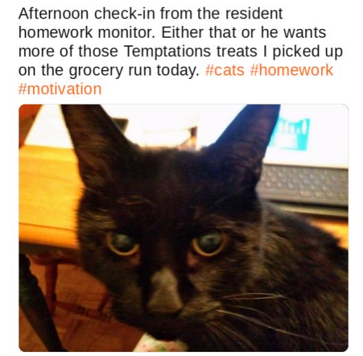 black cat checking in on homework