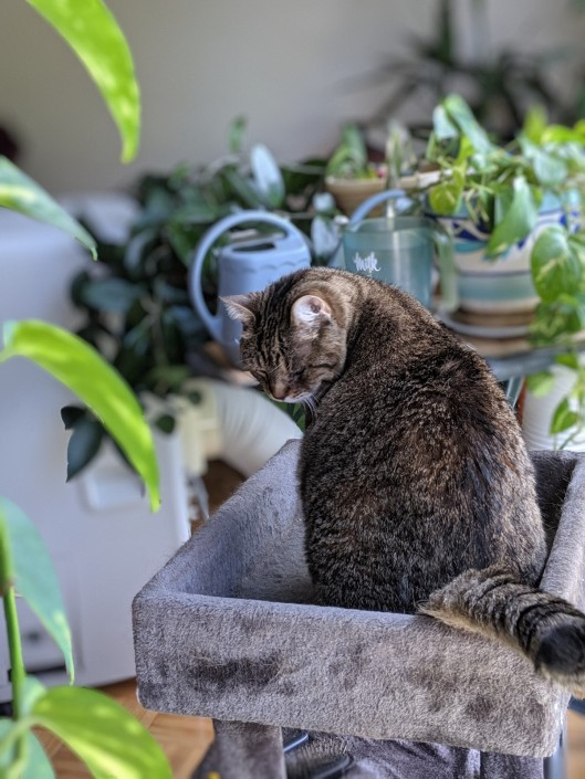 tabby cat sitting surrounded by plants and air conditioner