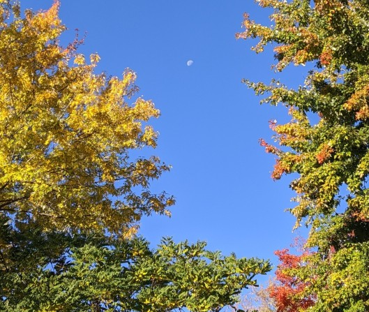 autumn trees and waning moon