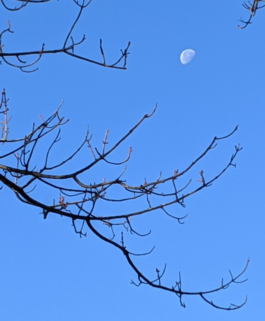 autumn moon tree