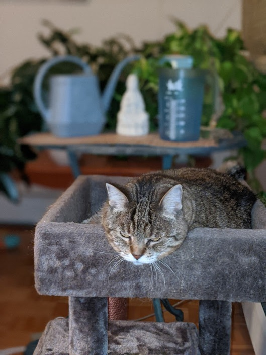 bored tabby cat