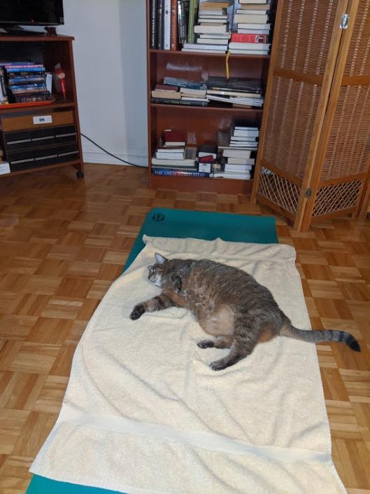 Tabby Cat on my yoga mat